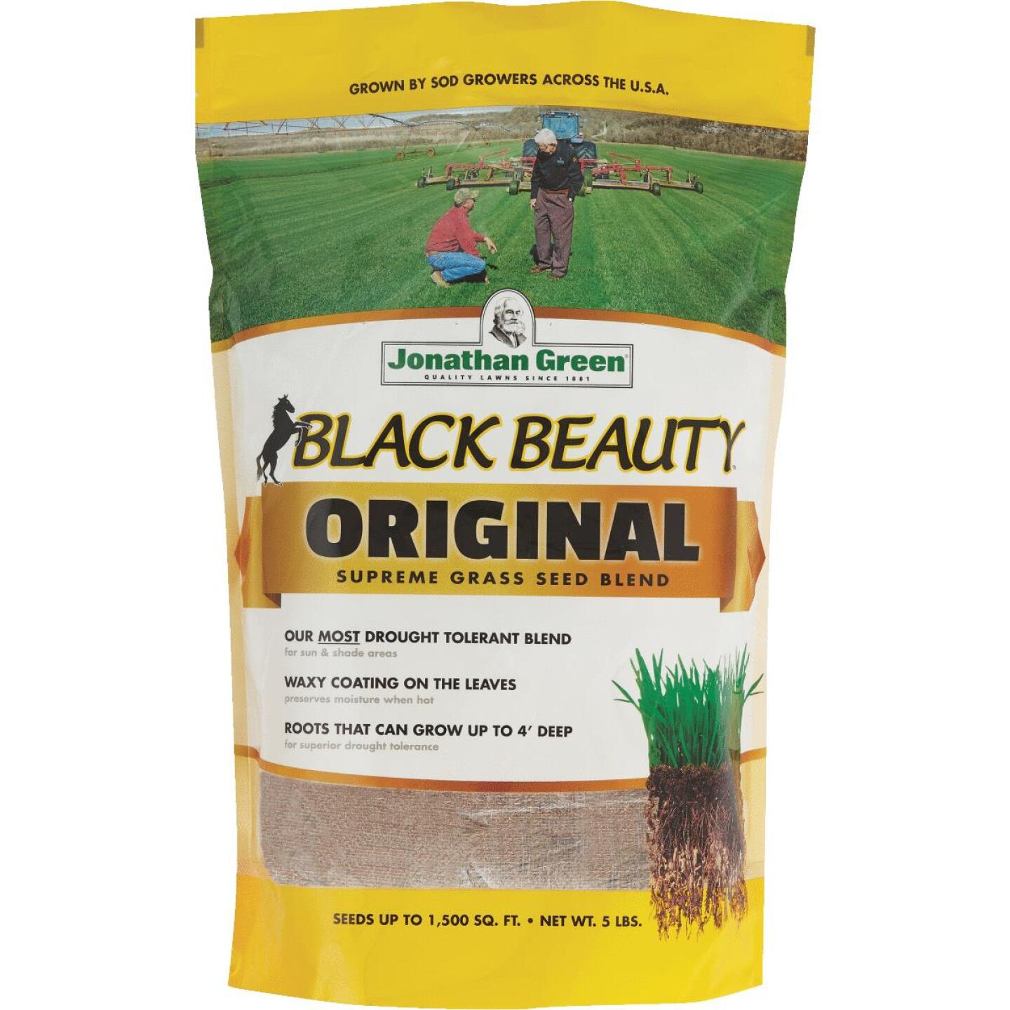 Jonathan Green Black Beauty 5 Lb. 750 Sq. Ft. Coverage 100% Tall Fescue Grass Seed Image 1